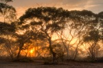 Sunrise in the bush