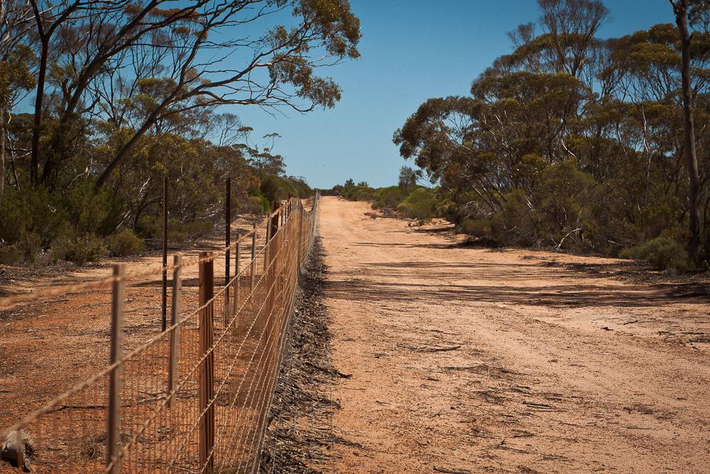 Rabbit proof fence wa world cycling tour